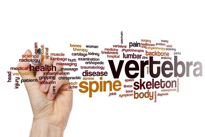 What are Vertebra?